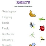 Match the words to the insects