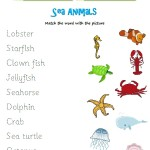 Match the word to the sea animal