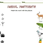 Match the footprints to the animal that makes them
